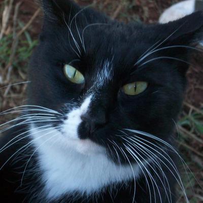 Cat Examiner