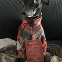 cute dog with passport